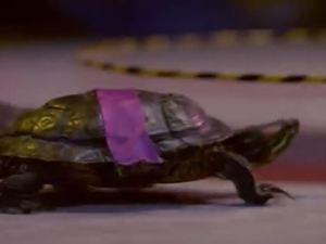 Donatello, no!